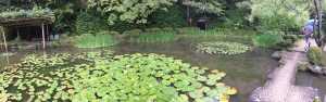 Water Lillies, Heian Shrine