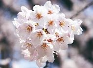 5 petals