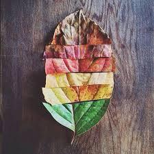 colored-leaf